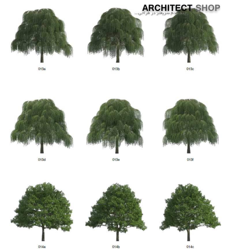 پرسوناژ درخت