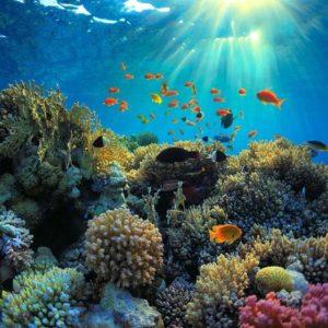 تصاویر HDRI دریا و زیر آب