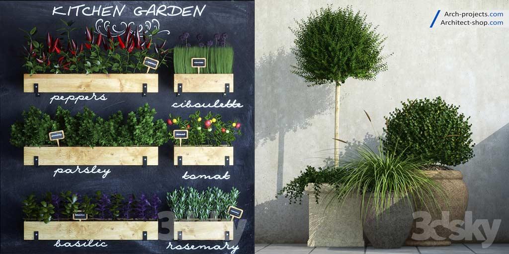 آبجکت گیاهان آپارتمانی