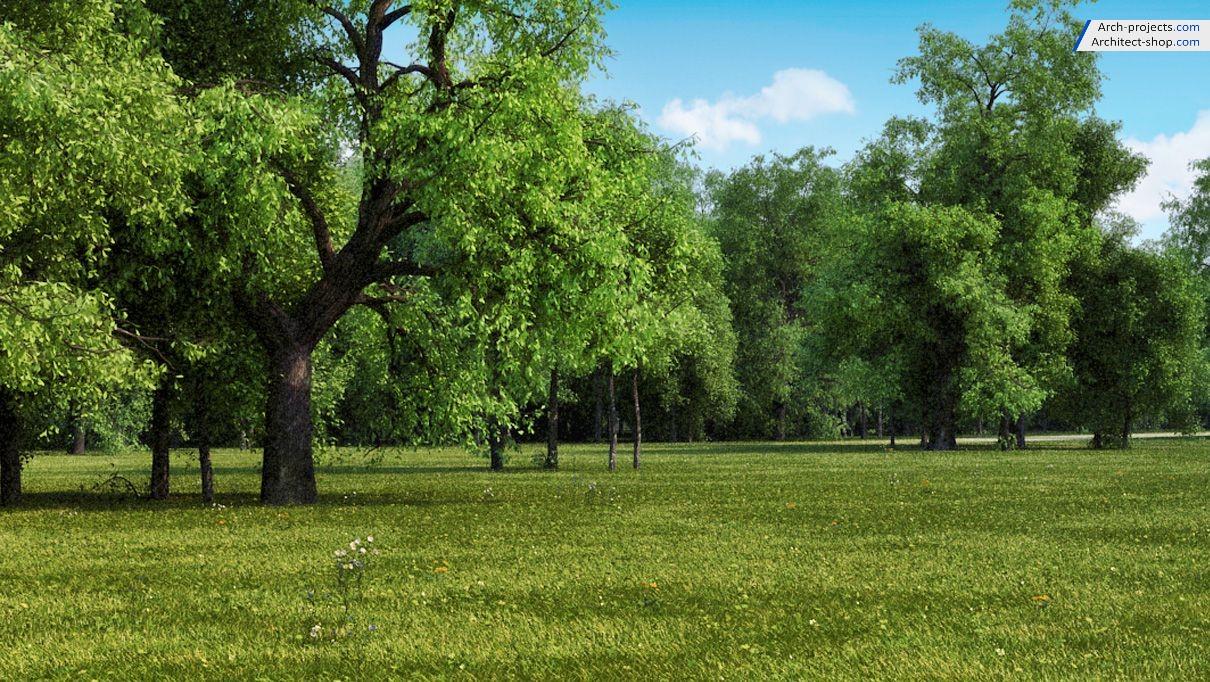 آبجکت های حرفه ای درخت ، گل و گیاه ، فضای سبز و محوطه سازی