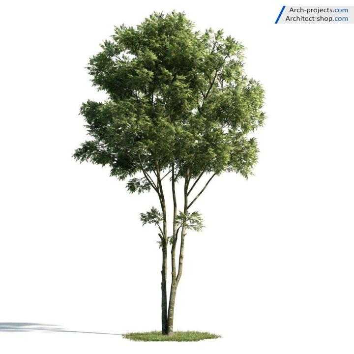 دانلود رایگان آرچ مدل 171 – آبجکت درخت