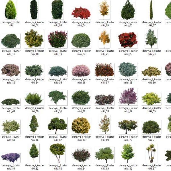 تصاویر دو بعدی درخت