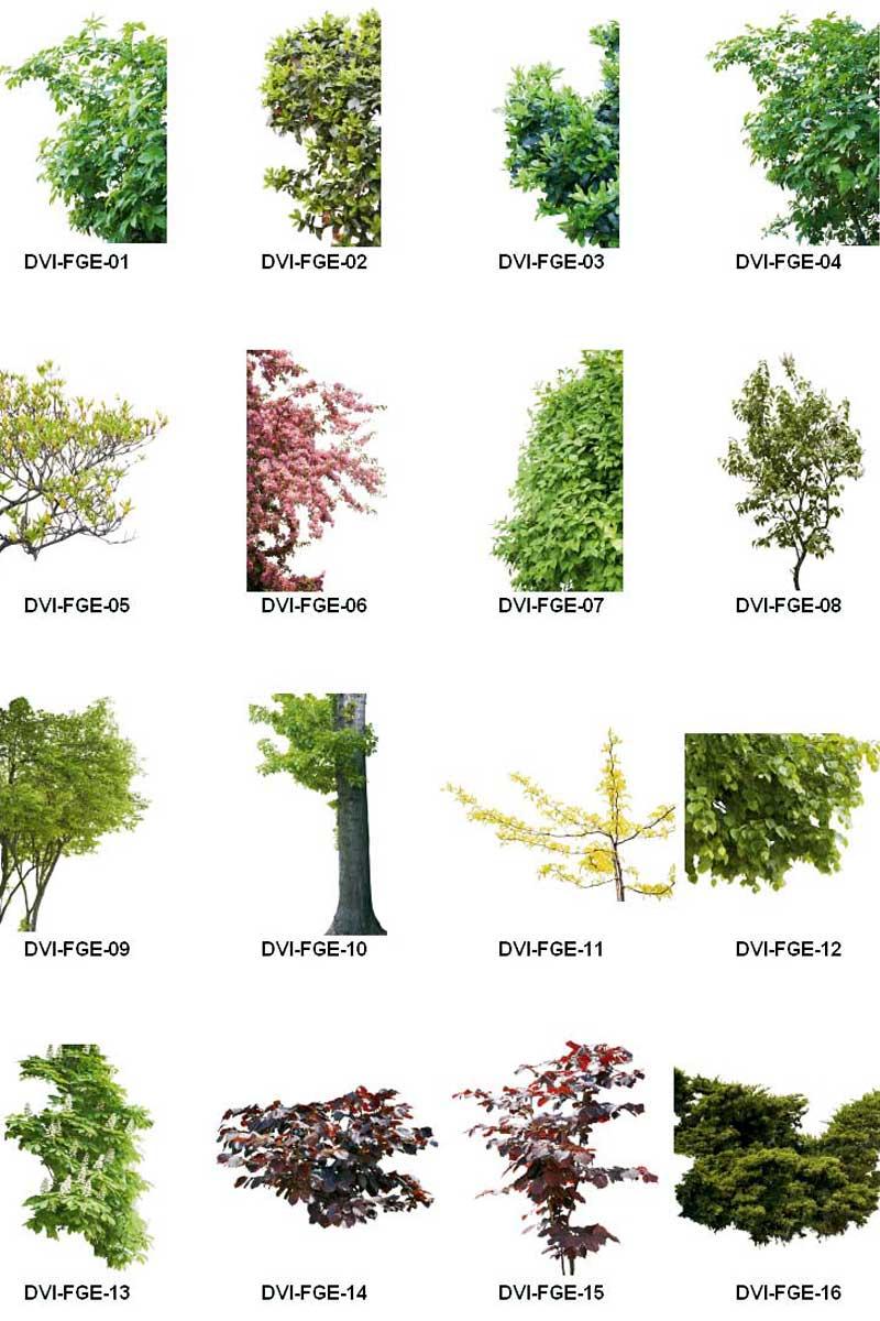 دانلود تصاویر نمای نزدیک درخت و گیاهان