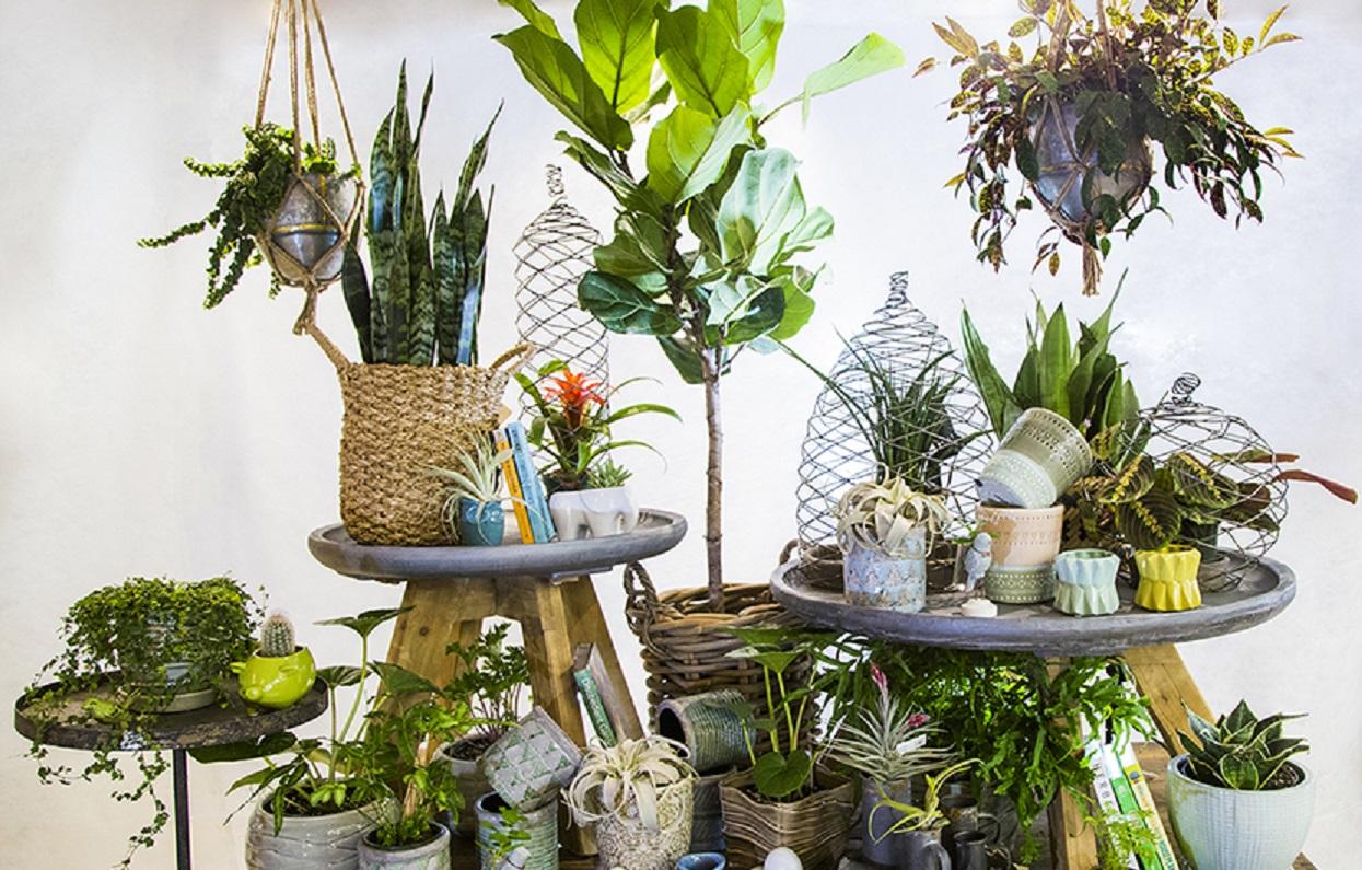 معرفی 5 گیاه آپارتمانی برای دکوراسیون داخلی - House Plants 6