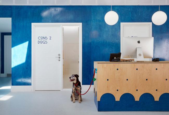 طراحی داخلی بیمارستان حیوانات خانگی در لندن