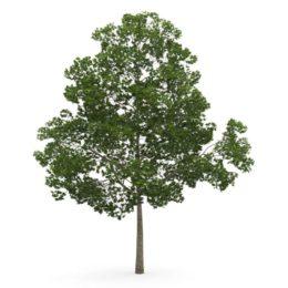 دانلود مجموعه مدل سه بعدی درخت از CGAxis