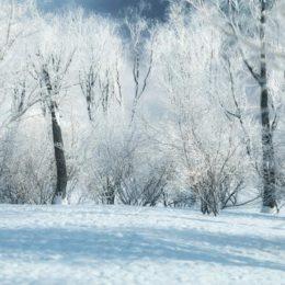 دانلود مجموعه مدل سه بعدی درخت زمستانی از R&D Group