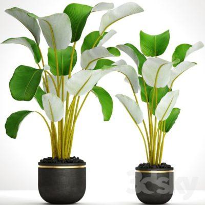 آبجکت گل و گیاهان زینتی