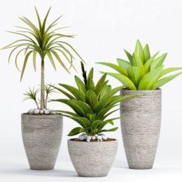 دانلود آبجکت گل و گیاهان زینتی از Pro 3DSky