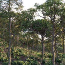 دانلود مجموعه آبجکت درخت و چمن از VizPark