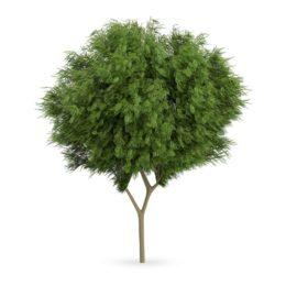 دانلود مجموعه آبجکت درختان فضای سبزاز CGAxis