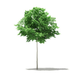 دانلود آبجکت درختان زینتی و فضای سبز از CGAxis