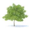 مدل سه بعدی درختان میوه