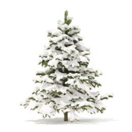 دانلود آبجکت درخت کاج از CGAxis