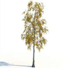 دانلود مجموعه آبجکت درخت پاییزی از R&D Group