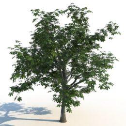 دانلود رایگان مجموعه آبجکت درخت تابستانی از R&D Group