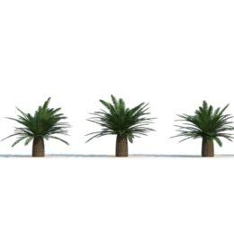 دانلود مجموعه مدل سه بعدی درخت نخل از R&D Group