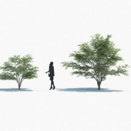 دانلود مجموعه آبجکت درخت و گیاه از Maxtree