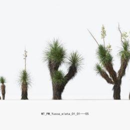 دانلود آبجکت کاکتوس و گیاهان کویری از Maxtree