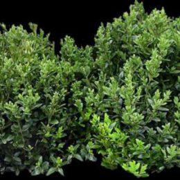 پرسوناژ درختچه و بوته گیاهان با فرمت PNG